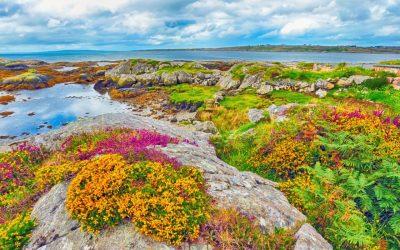 Biodiversity Enhancement Plan Training for Clare Communities