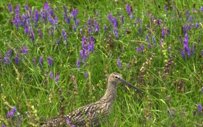 Biodiversity enhancement plan training for Clare farmers